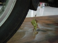 The bike brought some Ohio leaves with it, attached to the cobwebs...